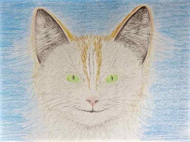 Dessin Chaton blanc / Drawing A whitekitten